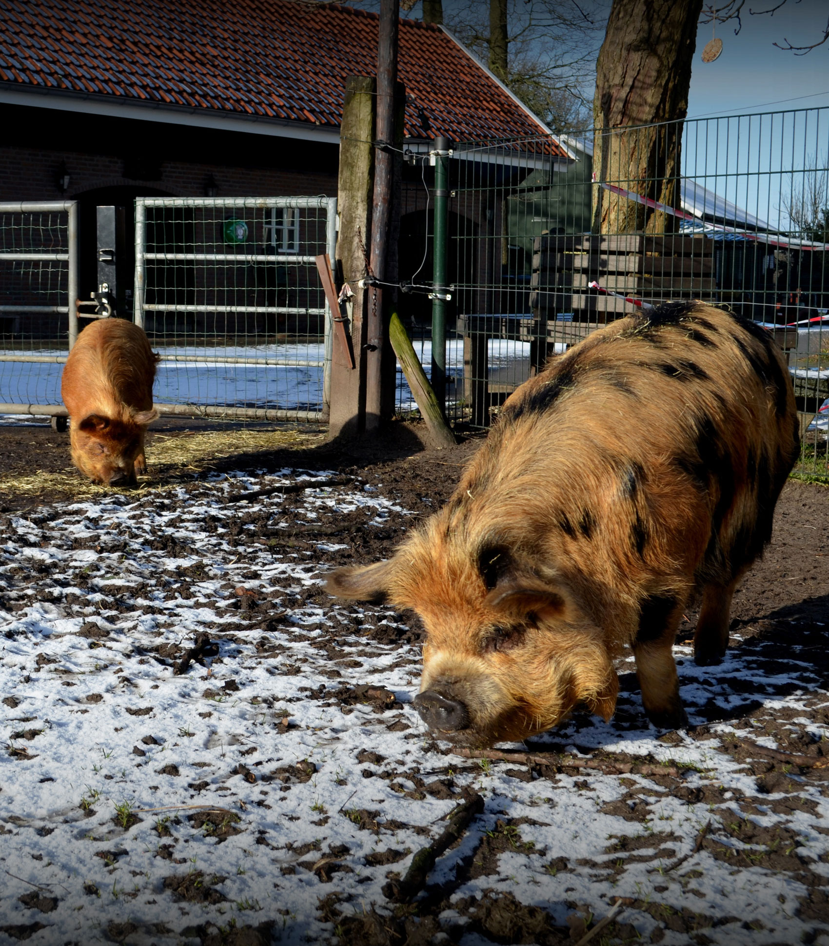 de-speelboerderij-dieren